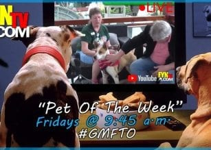 Pet of the Week, dog, puppy, Katrina,